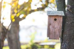 Volière sur un arbre, automne photos libres de droits