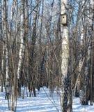 Volière sur un arbre de bouleau Photos stock