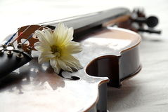 Volin e flor Imagem de Stock