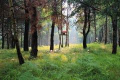 Voljär i skog Arkivbild