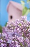 Voljär lila, vår, nytt hem. Royaltyfria Bilder