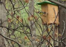 Voljär på träd med fågeln Royaltyfria Foton