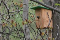 Voljär på träd med fågeln Fotografering för Bildbyråer