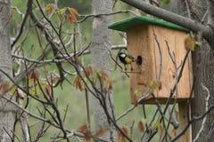 Voljär på träd med fågeln Royaltyfri Foto
