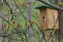 Voljär på trädet för fåglar Royaltyfri Fotografi