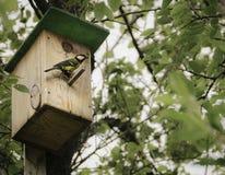 Voljär på trädet för fåglar Arkivfoton