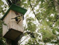 Voljär på trädet för fåglar Arkivbild