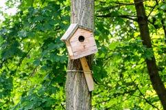Voljärhus för fåglar på ett träd i parkera Arkivfoton