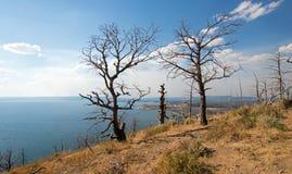 Volkomen gebrande bomen bij Meerbutte Mening boven Yellowstone-Meer in het Nationale Park van Yellowstone in Wyoming Royalty-vrije Stock Fotografie