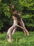Volkomen gevallen die boom in het bos door installaties wordt omringd stock foto's