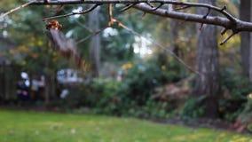 Volkomen vernietigd blad die zich aan een boomlidmaat vastklampen op een winderige dag stock video