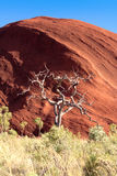 Volkomen vernietigde eucalyptus Stock Foto