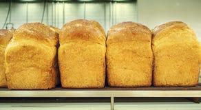 Volkorenbrood op de plank Royalty-vrije Stock Foto's