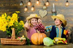 Volksschulefallfestivalidee Herbsterntefest Kinderspiel-Gemüsekürbis Kindermädchen-Jungenabnutzung lizenzfreies stockbild