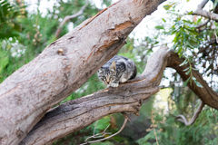 Cat on tree royalty free stock image