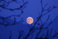 Voll-Mond Lizenzfreie Stockbilder