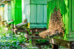 Voll von den Honigbienenstöcken im Sommer Stockfotos