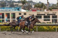 Vollblütige Pferde, die großes Rennen aufwärmen Lizenzfreies Stockbild