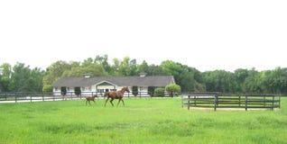 Vollblütige Pferdestute und -fohlen stockfotos