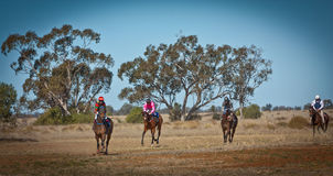 Vollblütige Rennpferde, die zur Skala im australischen Busch zurückgehen Lizenzfreies Stockbild