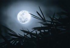 Volle maan in de donkere hemel met takkenvoorgrond Stock Foto's