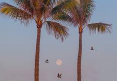 Volle maan in de hemel bij zonsopgang Royalty-vrije Stock Afbeelding