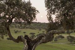 Volle maan in een landelijk landschap van Castro, Verde, in Alentejo Stock Foto's