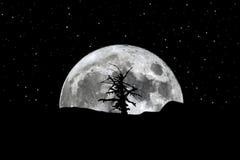 Volle maan het toenemen de sterren van de silhouetboom Stock Afbeeldingen