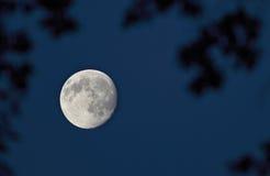Volle maan op de donkere nachthemel stock foto's