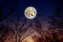 Volle maan, raven stock fotografie