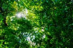 Volle Rahmenbäume, grüne Hintergrundbäume und Natur Stockbild