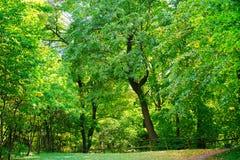 Volle Rahmenbäume, grüne Hintergrundbäume und Natur Stockfotos