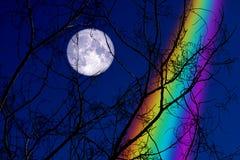 Volledig Buck Moon terug op boom van de silhouet de droge tak op nachthemel en regenboog stock afbeelding