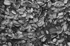 Volledig die Kader van Autumn Leaves op Grond wordt geschoten Stock Afbeelding