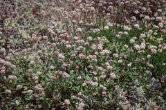 Volledig die Kader van Sierlijk Wildflower-Gebied wordt geschoten Royalty-vrije Stock Afbeeldingen
