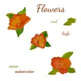 Volledig editable geschilderde bloemen en bladeren Stock Fotografie