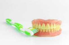 Volledig Gebit met tandenborstel Royalty-vrije Stock Afbeeldingen