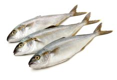 Volledig gekweekte gerijpte die makreel in grote scholen in de oceanen wordt gevonden stock afbeeldingen