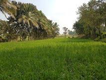 Volledig groene landbouwgrond met bomen royalty-vrije stock foto