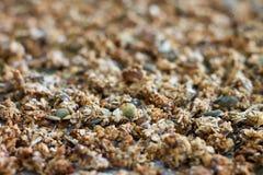 Volledig-kader van naar huis gebakken granola stock afbeeldingen