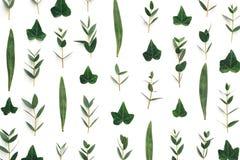 Volledig Kadergeklets met Groene Bladeren Stock Afbeelding