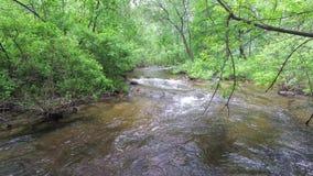Volledig-stroomt stroomstromen snel in het bos stock footage