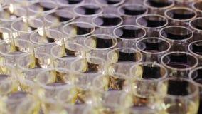 Volledige glazen voor wijn op de buffetlijst stock footage