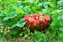 Volledige kom van aardbeien Stock Foto