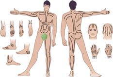 Volledige lengte (voorzijde & rug) meningen van een bevindende mens Stock Afbeelding