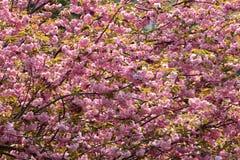 Volledige omvang van het gelijktijdige bloeien stock fotografie