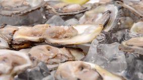 Volledige plaat van oesters stock footage