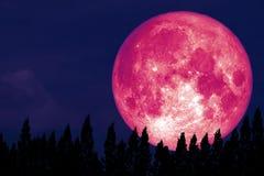 Volledige Rose Moon terug op silhouetpijnboom op nachthemel stock afbeelding