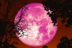 volledige wormmaan terug op silhouetinstallatie en bomen op nachthemel royalty-vrije stock foto's