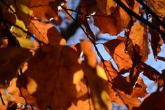 Voller Rahmen des orange Herbstlaubs Stockfotografie